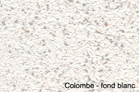 colombe - fond blanc